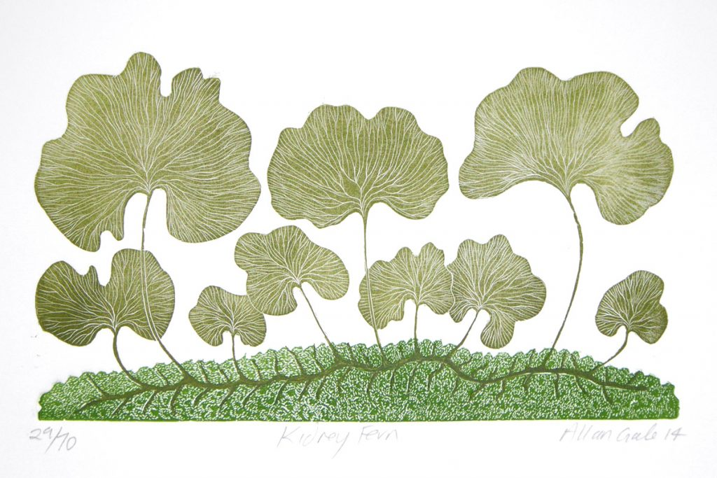 Print of a Kidney Fern by Allan Gale