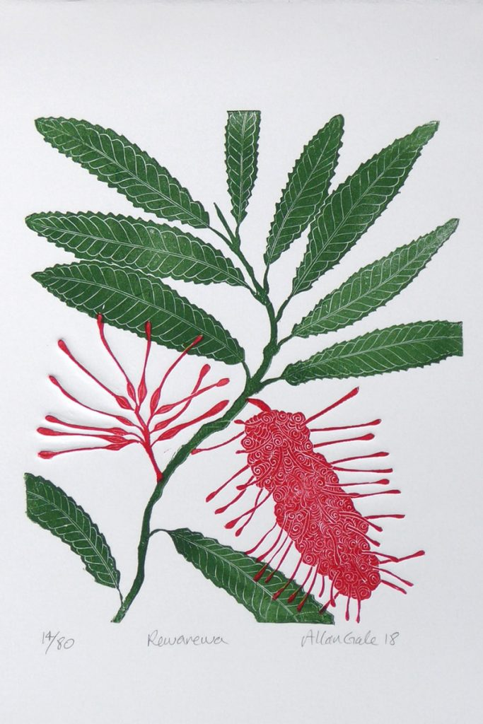 Print of the flowers and leaves of the Rewa Rewa plant by Allan Gale