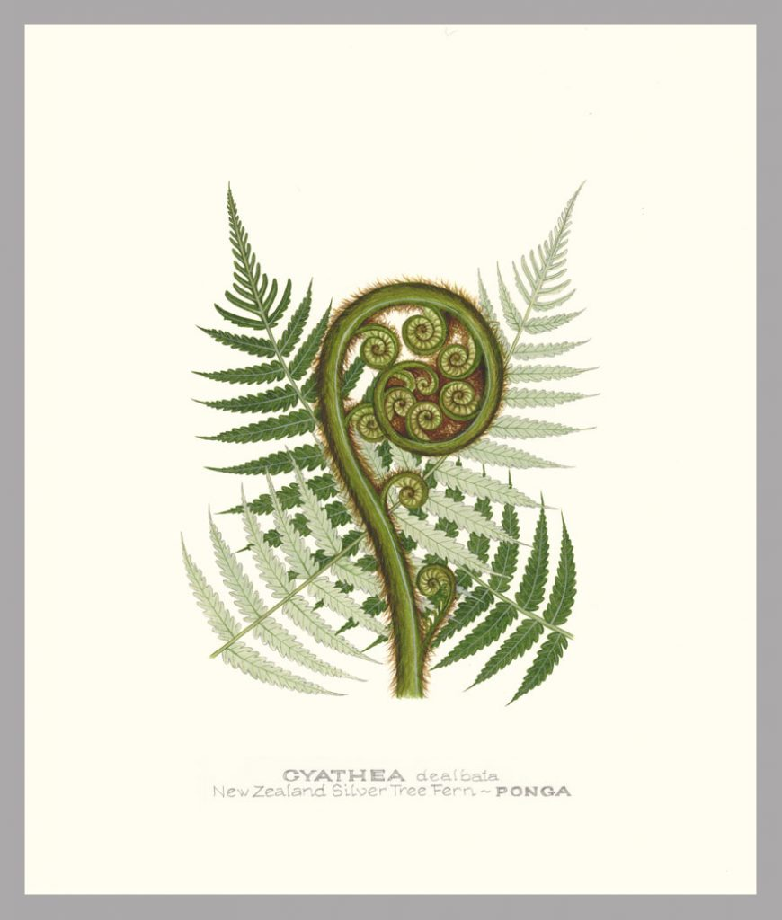 NZ silver tree fern frond, botanical print by Jo Ewing