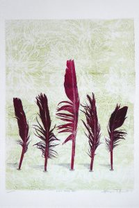 Print of five red feathers by Sheyne Tuffery