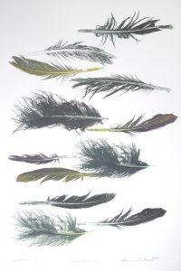 Print of various feathers by Sheyne Tuffery