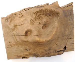 Carin Wilson Kura Gallery Maori Art Design New Zealand Puriri Sculpture Te Upoko o Mataoho 4