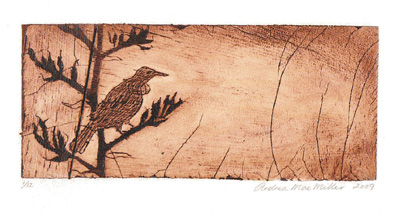 Untitled Tui, print bamboo etching, 2009 Andrea Mae Miller exhibition kura art gallery new zealand