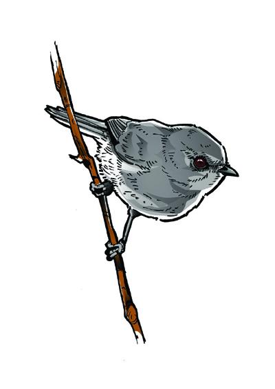 Joel Nicholls Kura Gallery Maori Art Design New Zealand Aotearoa Printmaker Digital Birds Warbler Riroriro